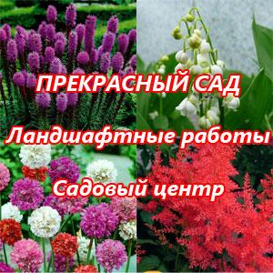 Садовый центр ВЕДАТА, прекрасный сад